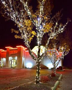 Lee Read Jewelers - Winter White Trees 3