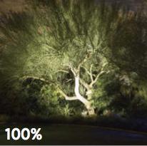 landscape lighting, dimmable, dimming, light beam, tree lights, up lights, Silver Bells, Boise landscape lighting