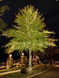 Lakemoor HOA 2019 - Warm White Tree 2.jp