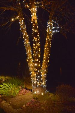 LED Christmas Lights - Warm White
