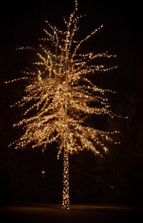 Lakemoor HOA 2015 - Warm White Tree.jpeg