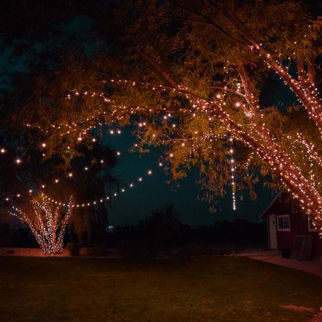 Wedding Lighting by Silver Bells at Sunflower Lane - Nampa, ID