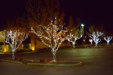 Lee Read Jewelers - Winter White Trees 5