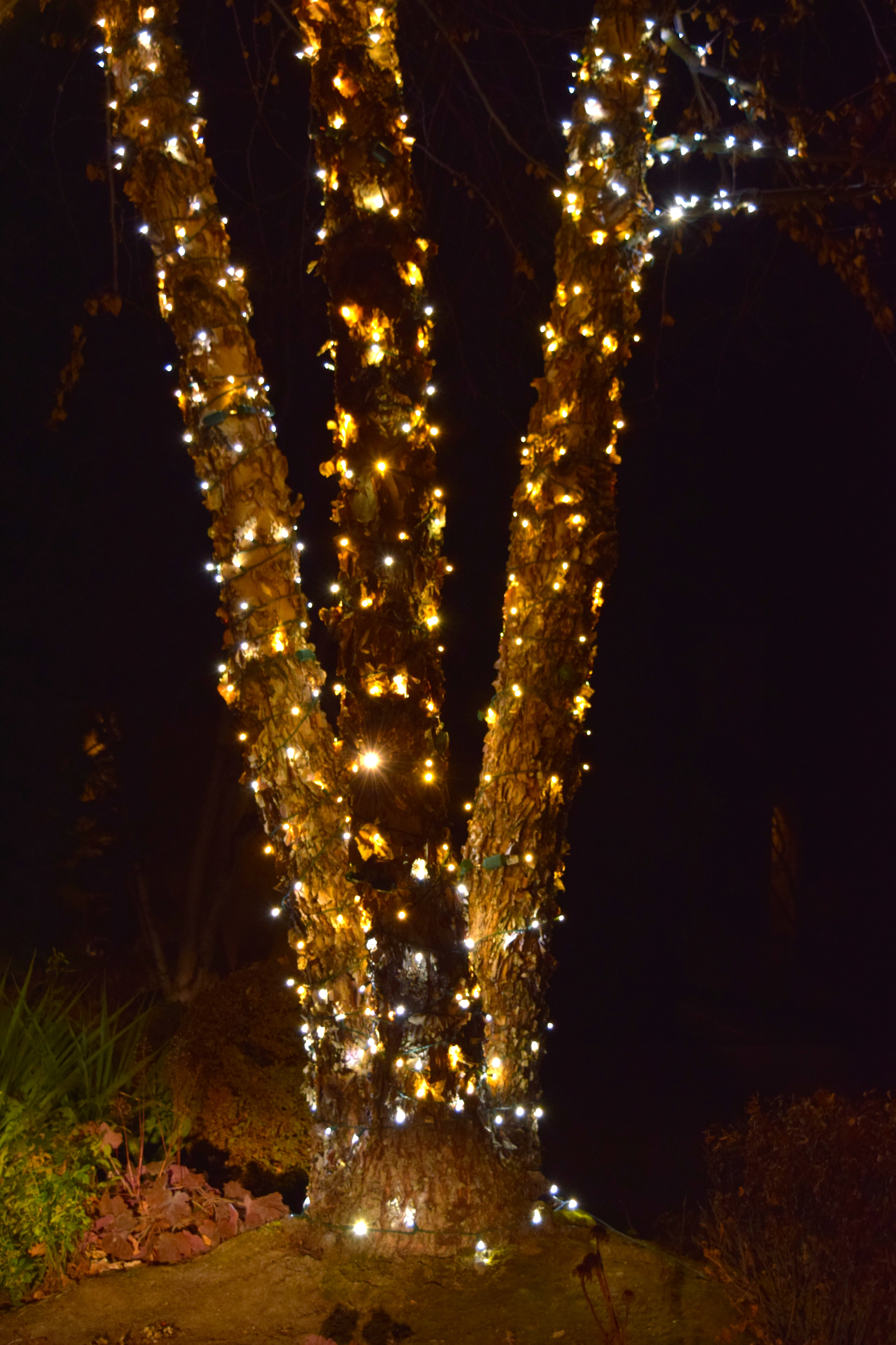 LED Christmas Lights - Tree Wrap - Warm White