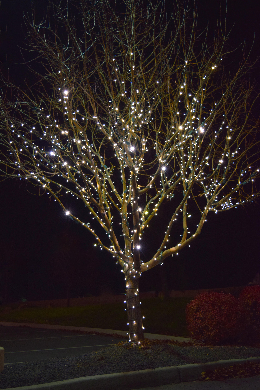 LED Christmas Lights - Pure White Tree Wrap