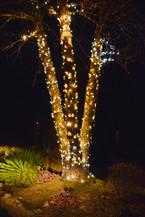 Ferguson, Judi - Warm White Tree 2.jpeg