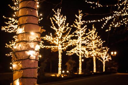 Lakemoor HOA 2015 - Colchester Trees - W