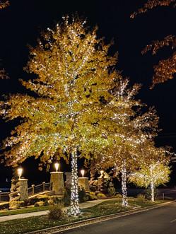 Lakemoor HOA 2019 - Warm White Trees 3.j