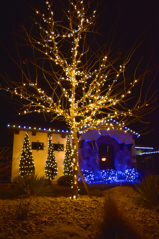 LED Christmas Lights - Warm White, Pure White, Blue