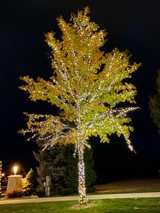 Lakemoor HOA 2019 - Warm White Tree.jpeg