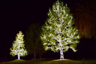 Martin, Wayne - Pure White Trees 5.jpeg