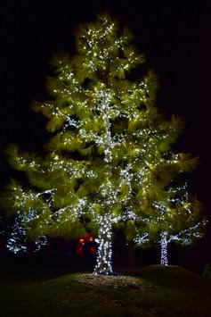 Martin, Wayne - Pure White Trees.jpeg