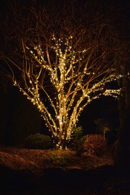 Ferguson, Judi - Warm White Tree 3.jpeg