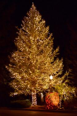The Woods HOA - Warm White Evergreen Full Wrap