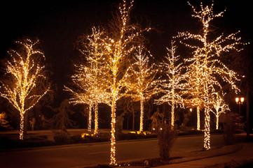 Lakemoor HOA 2015 - Warm White Trees.JPG