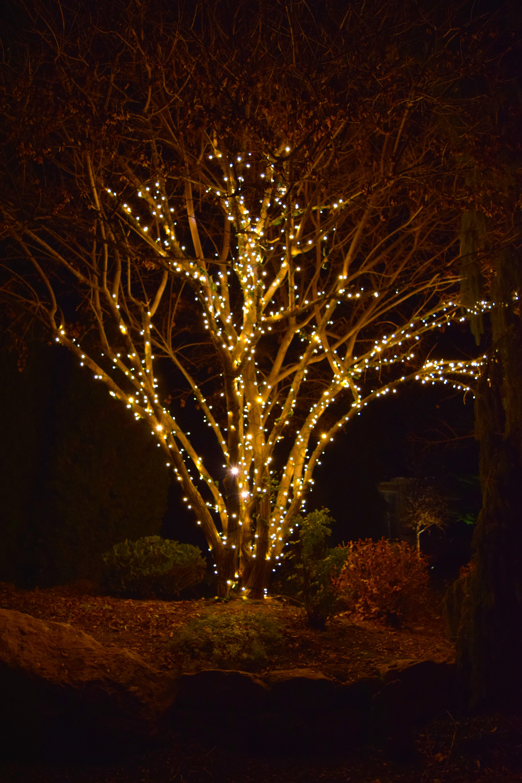 LED Christmas Lights - Warm White Tree Wrap