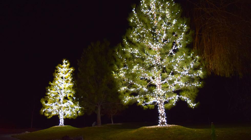 LED Christmas Lights - Pure White Full W