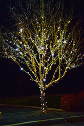 Lee Read Jewelers - Winter White Trees 4