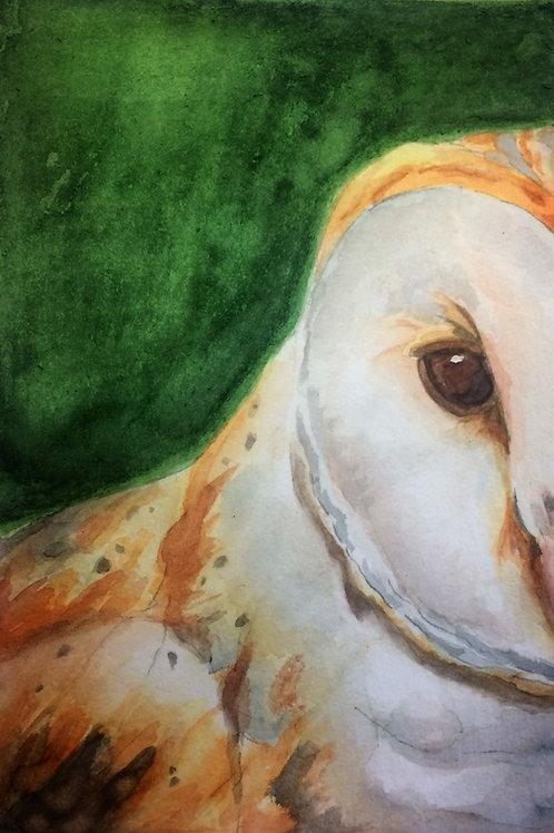 Owl - Print
