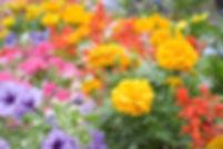 久留米の地域の方々に喜んで頂けるような花いっぱいの病院を目指す