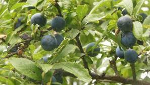 LES PREMIERS FRUITS DE L'ESPRIT  3/3 - les conséquences pratiques
