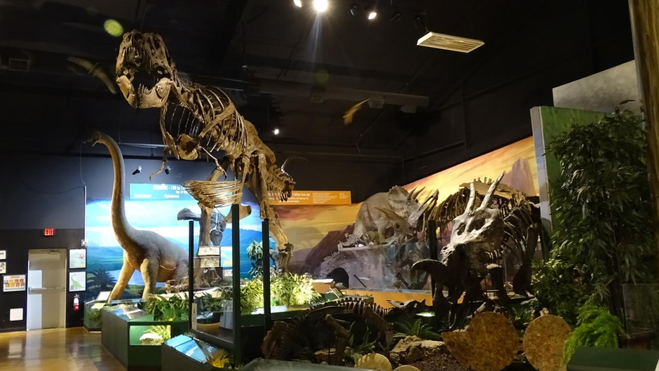 The Naranjo Museum of Natural History: On Curiosities and Relics