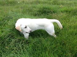 Isla in the long grass