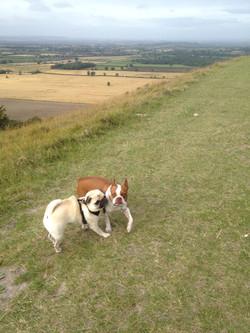 Buster & Dexter