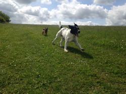 Ronny chasing Bailey