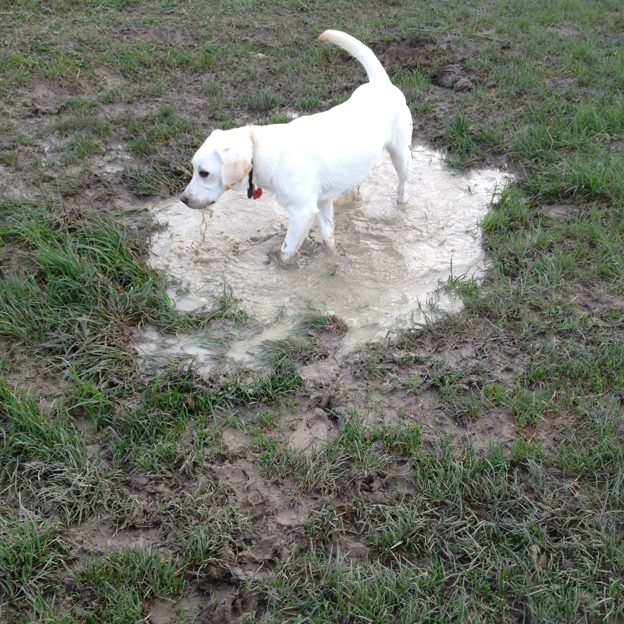 Isla in a puddle!
