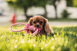 Dog with a toy