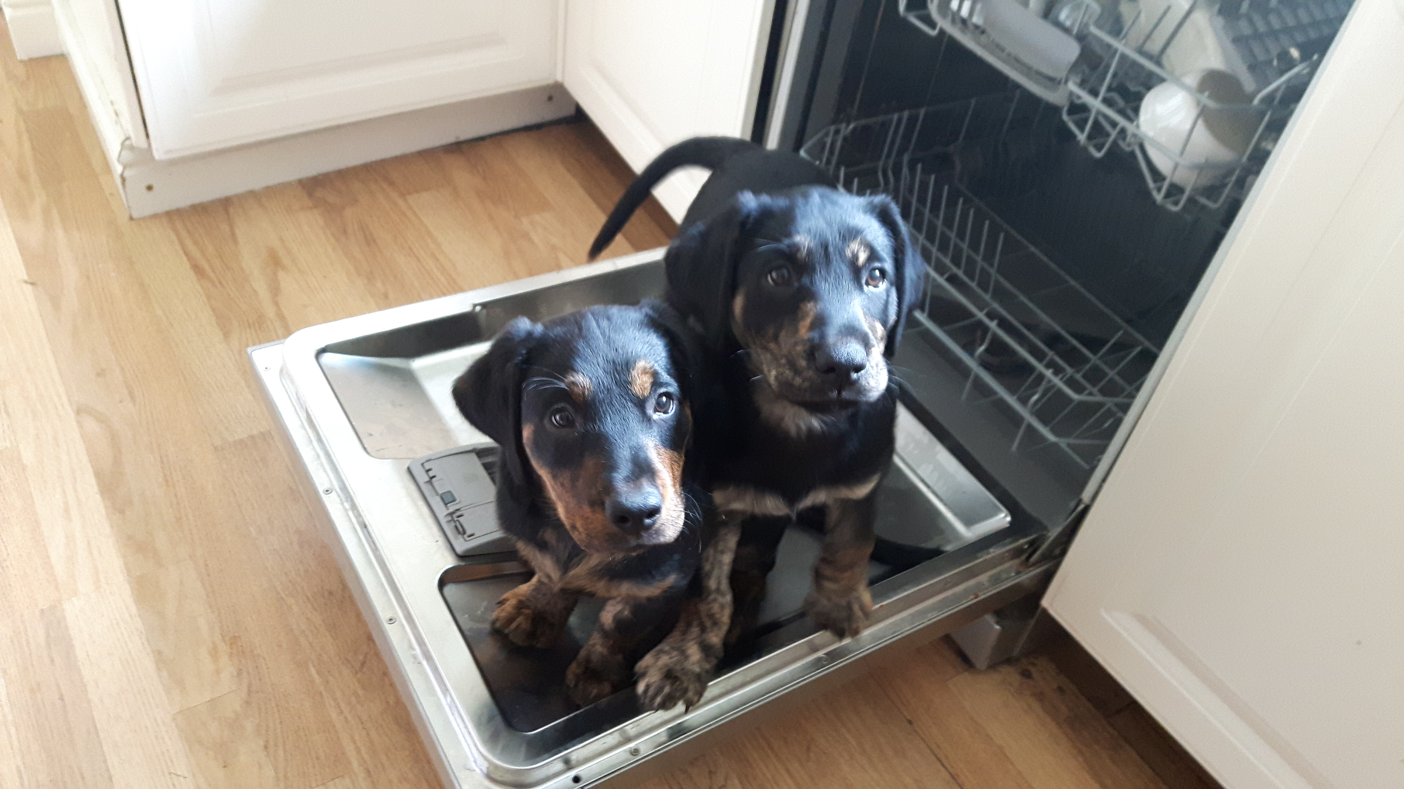 Helping with the dishes!