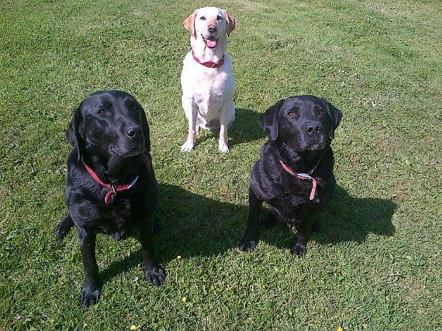 Marley, Scooby & Shaggy
