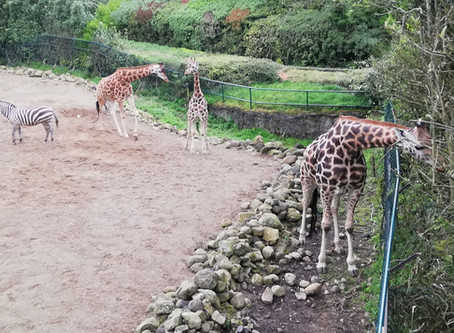 Chambers at Large: Belfast Zoo
