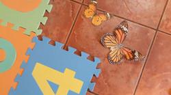 Jeu de société papillon 4