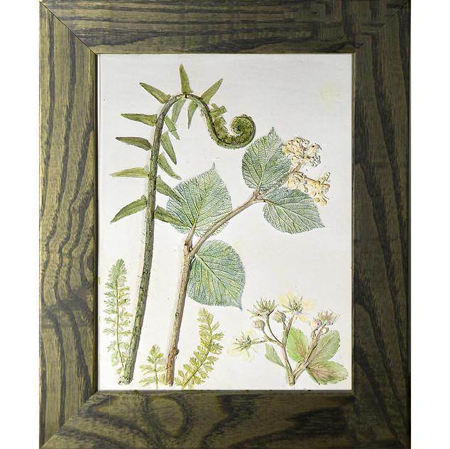 Hobblebush and Ferns