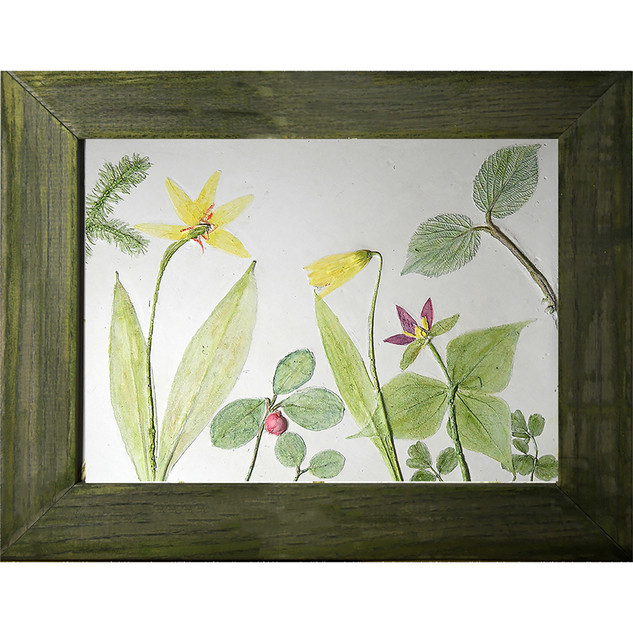 Trout Lily, Trillium and Wintergreen $115USD