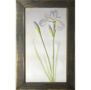 Iris in grey frame.jpg