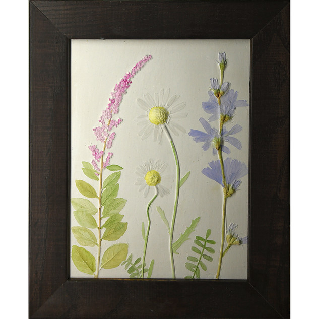 Daisies and Chickory