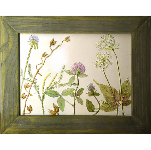 Clover, Raspberry leaves, and Queen Ann's Lace $115.00