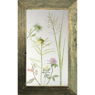 Queen Anne's Lace, Red clover and Grasses $150USD