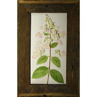 Hydrangea in barnwood  $150.00