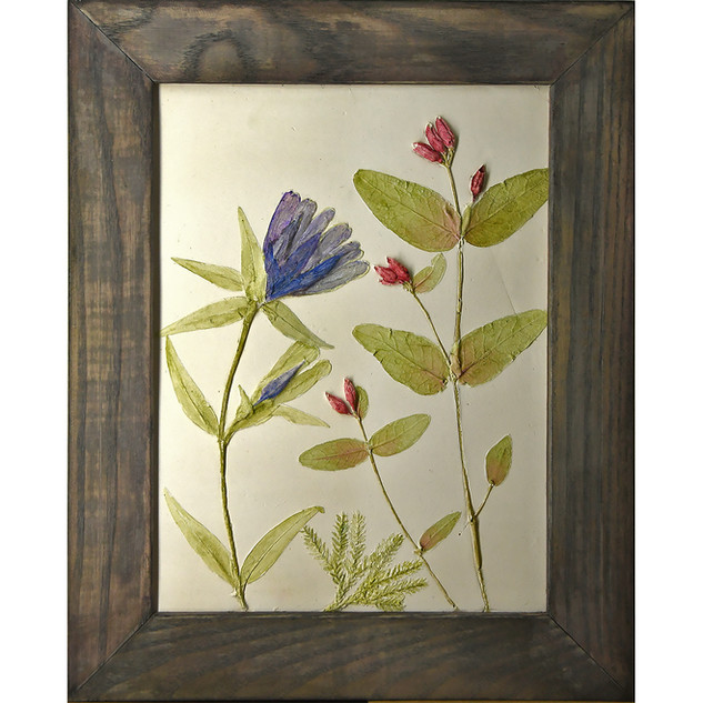 Gentian and St Johns Wort SOLD