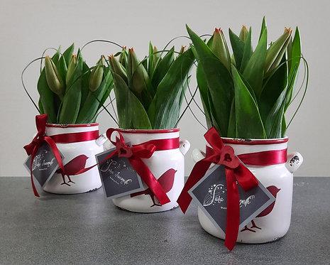 Les Tulips