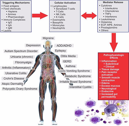 How-Food-Sensitivities-Cause-Inflammatio