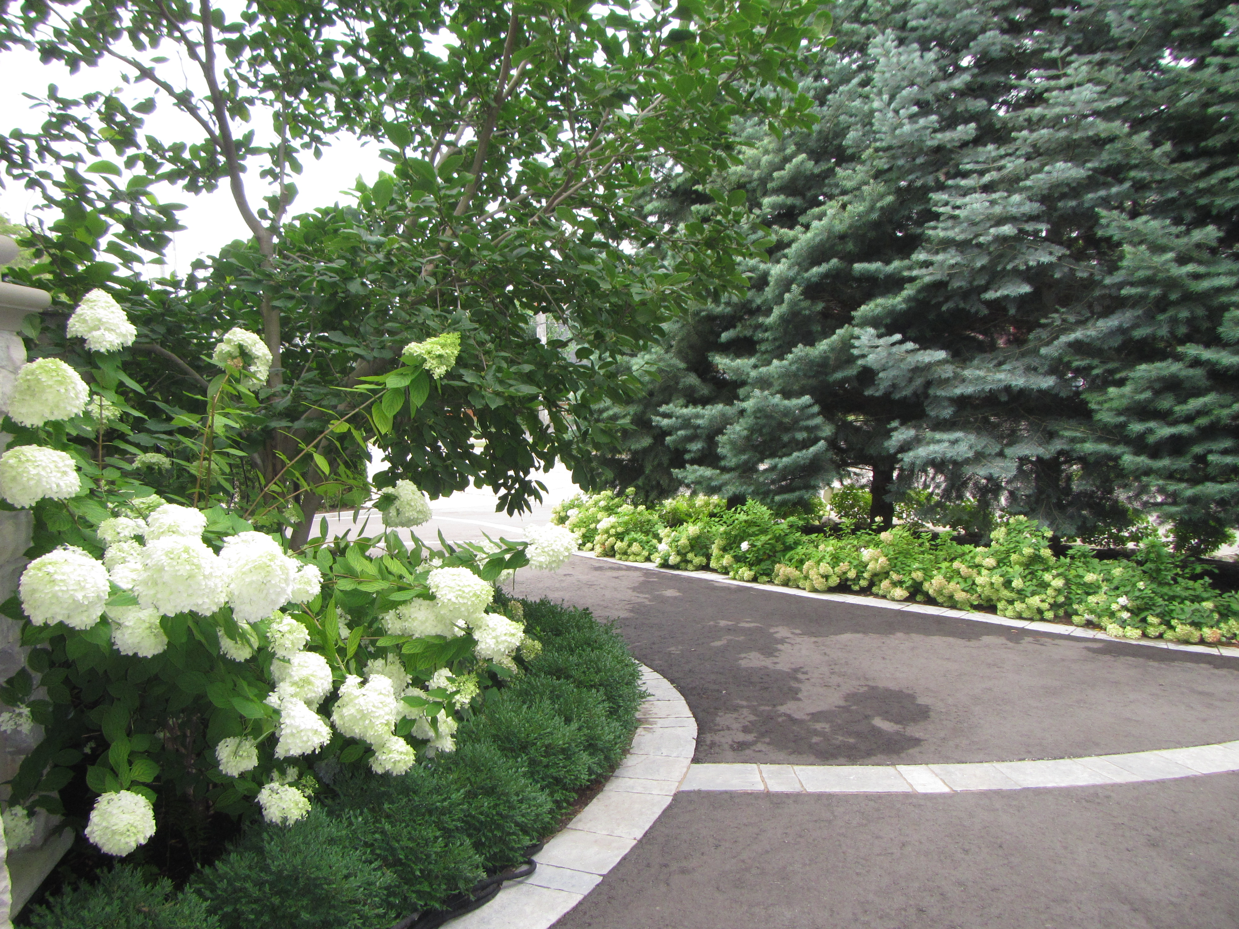 Driveway and garden ideas