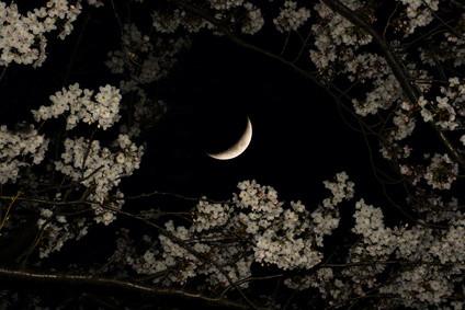 moon garden