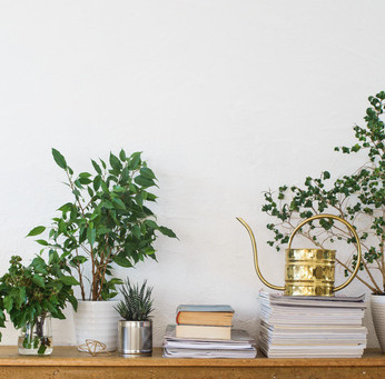 Houseplants - An Easy Solution