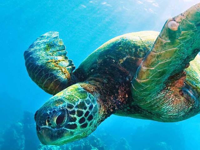 Sea Turtle (Eric) - 9 weeks Meetings