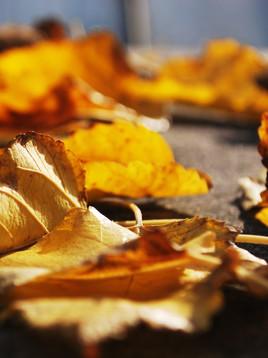 Autumn Must-Haves: Sustainabilady Closet